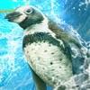 企鹅幻灯片赛车