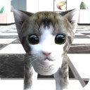猫咪在密室
