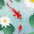 鱼戏荷塘红包版