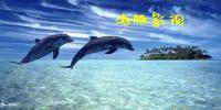 海豚影视版本大全
