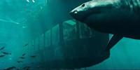 鲨鱼影视多种版本推荐