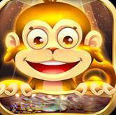 金絲猴app